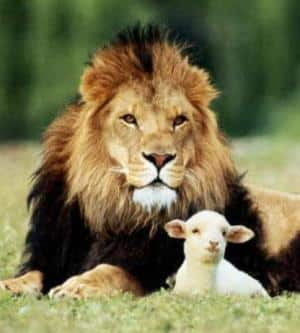 Longing for the Lion to lay down with the Lamb